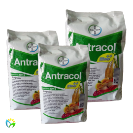 Antracol 70 WP - 250 Gram