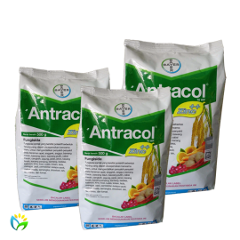 Antracol 70 WP - 500 Gram